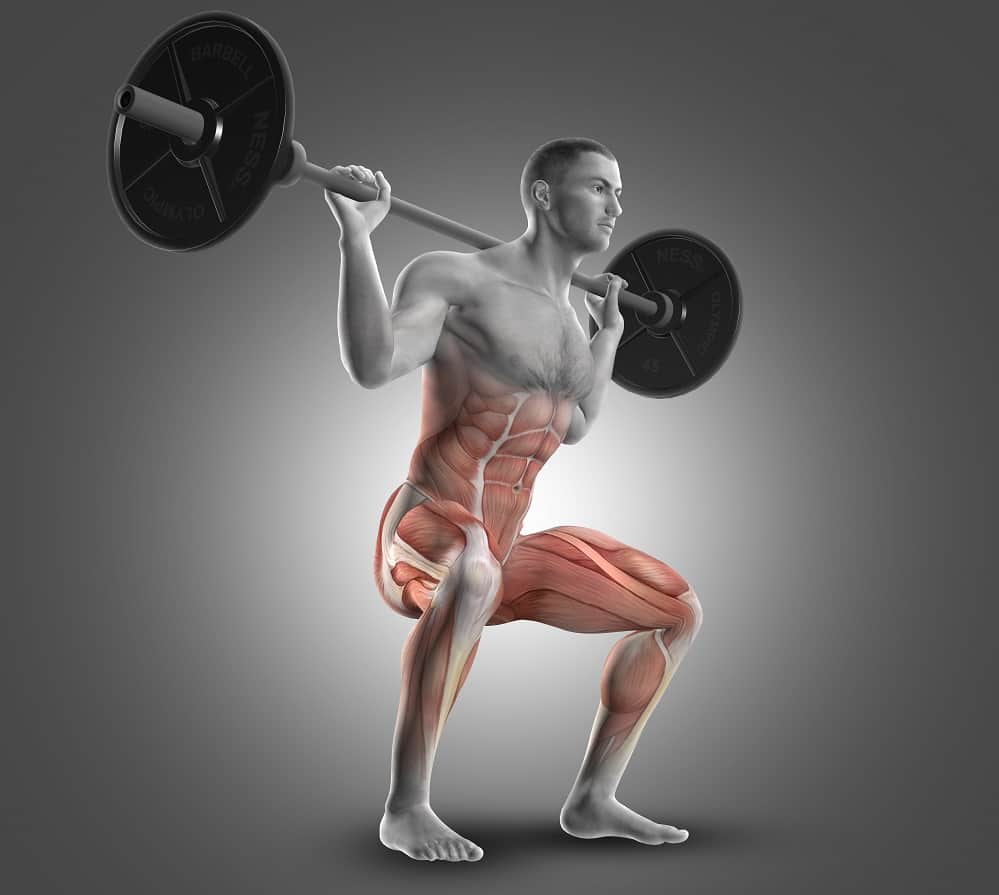 squat muscles used