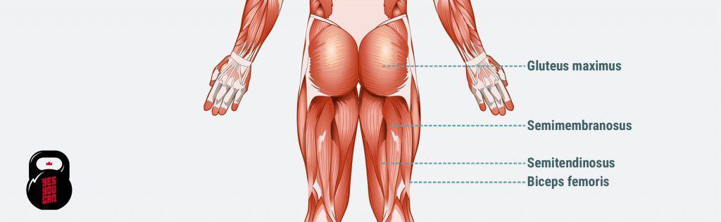 high sticking point deadlift muscles